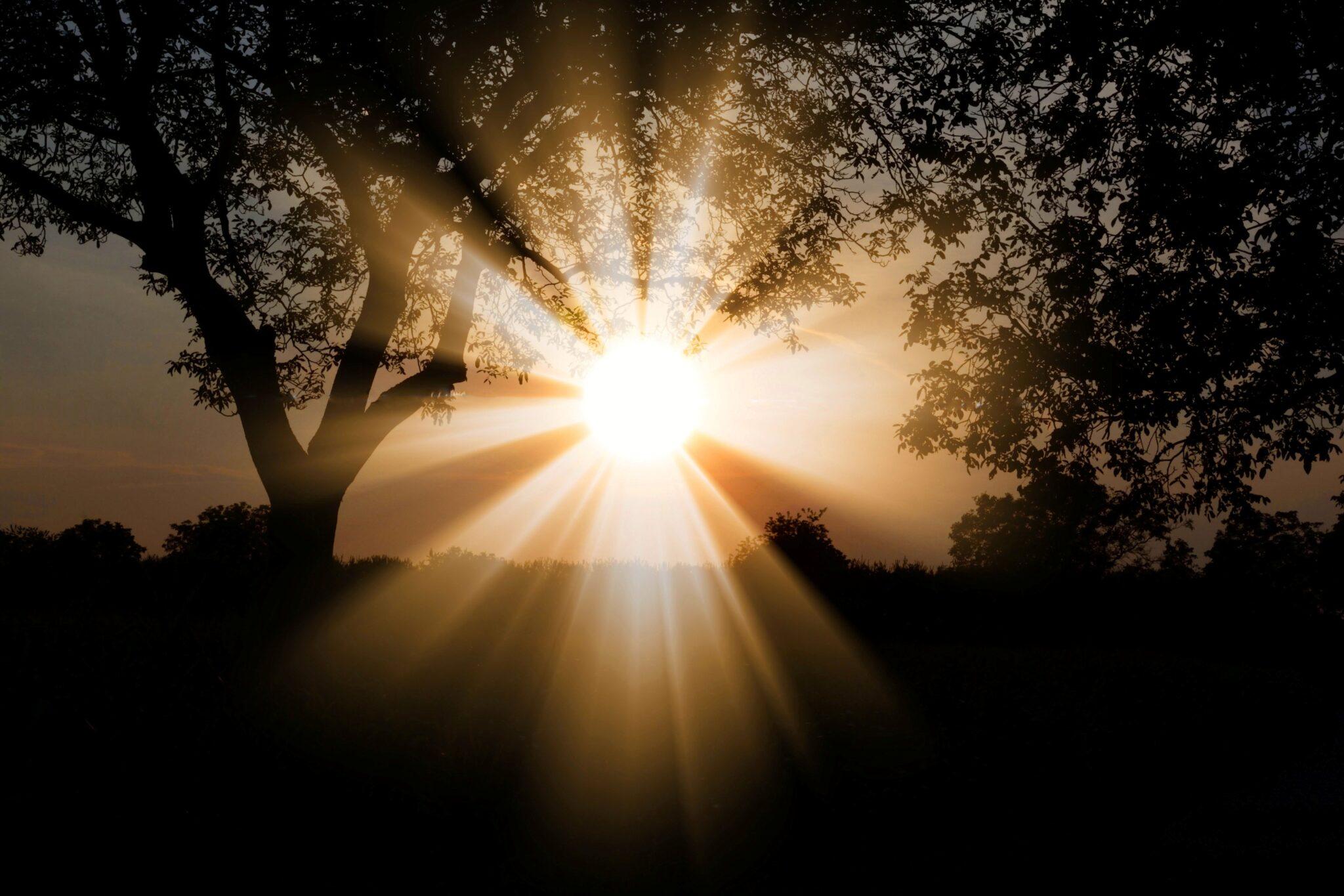 Photo d'un lever de soleil à travers les arbres
